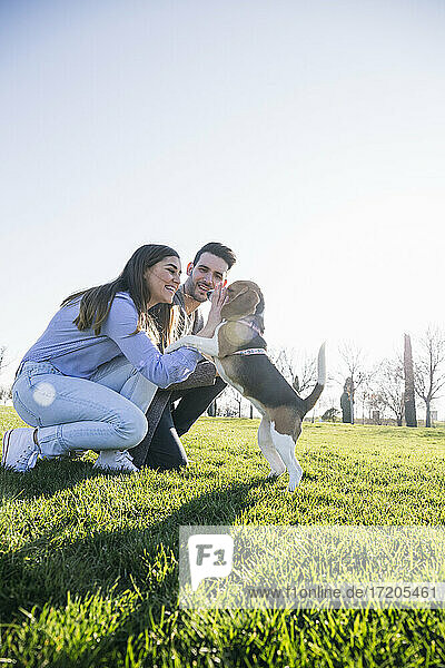 Couple playing with dog while crouching on grass at park