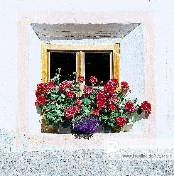Italien  Suedtirol  Provinz Bozen  Sued-Tirol  Bauernhaus  Fenster mit Blumen  Blumenfenster  Blumen Balkon  Blumen  Tradition |Italy  South Tyrol  Bolzano  Alto Adige  Farmhouse  Window with flowers  tradition  Flowers  balcony