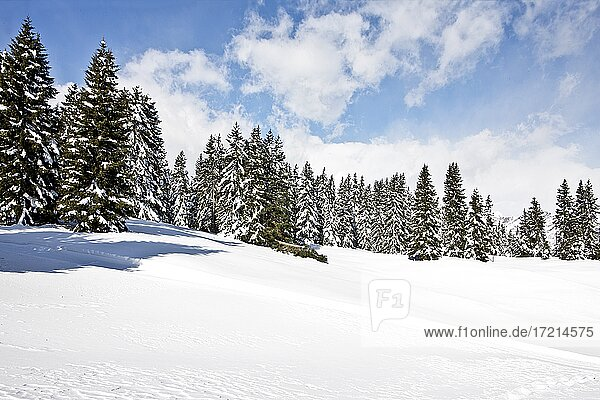 Italien  Italy  Suedtirol  Südtirol  Alto Adige  Provincia di Bolzano  Meran  Merano  Vigiljoch  Monte San Vigilio  Joch