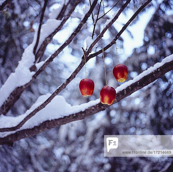 Stillife; Fest; Weihnachten; Weihnachtsschmuck  Schnee   Celebration; Christmas; Christmas decoration  snow