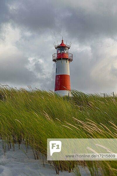 Abendstimmung  Rot-Weißer Leuchtturm List-Ost in den Dünen  Ellenbogen  Sylt  Nordfriesische Insel  Nordsee  Nordfriesland  Schleswig-Holstein  Deutschland  Europa
