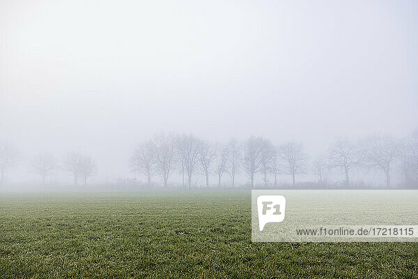 Kahle Eichen stehen am Rande einer Weide und sind nur schemenhaft durch den dichten Nebel erkennbar