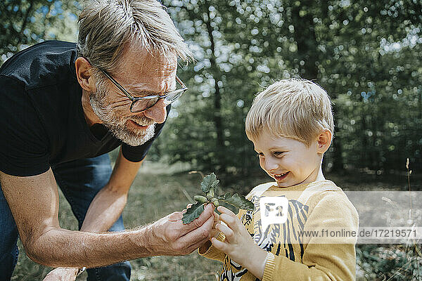 Smiling father showing acorn and oak leafs to son in forest