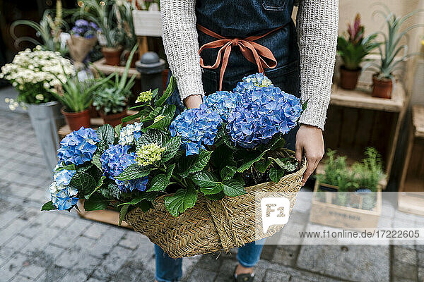 Young female florist holding basket of Hydrangea at flower shop