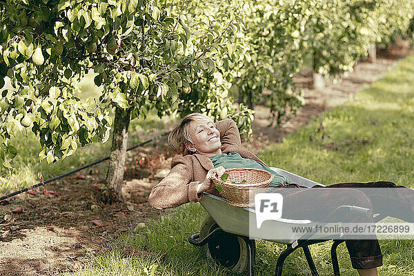 Smiling mature woman with wicker basket relaxing in wheelbarrow at orchard