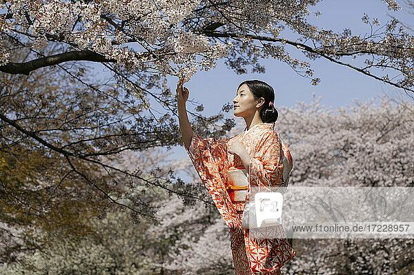 Schöne junge Frau im japanischen Kimono unter Kirschblütenbäumen