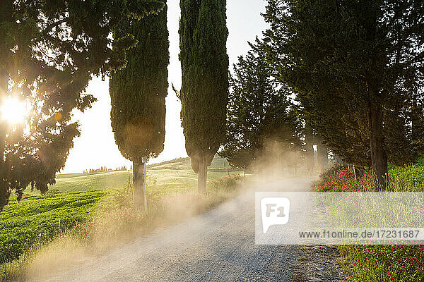 Dust on dirt Cypress tree lined road at sunset  Tuscany  Italy