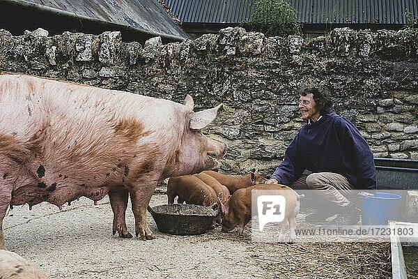 Frau füttert Tamworth-Schweinsau und Ferkel auf einem Bauernhof.