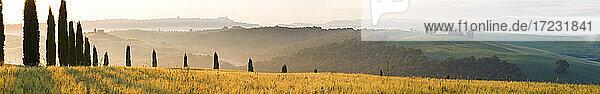 Früher Morgen  Zypressen  Capella di Vitaleta  Kapelle  Val d'Orcia