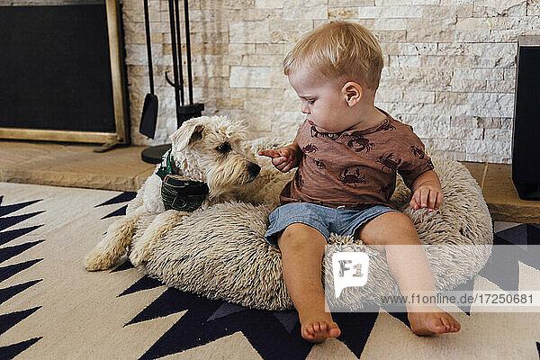 Kleinkind Junge sitzt mit Hund auf Haustier Bett zu Hause