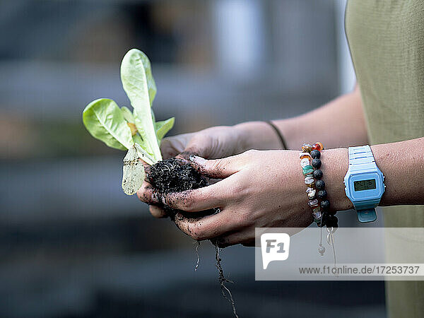 Australia  Melbourne  Close-up of woman's hands holding seedling