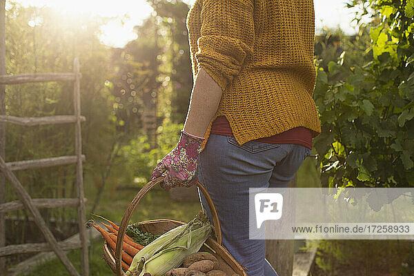 Woman harvesting fresh vegetables in sunny summer garden
