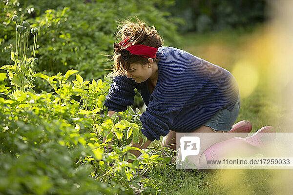 Frau kümmert sich um Pflanzen im Sommergemüsegarten