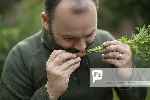 Nahaufnahme Mann riecht an frisch geernteter Karotte