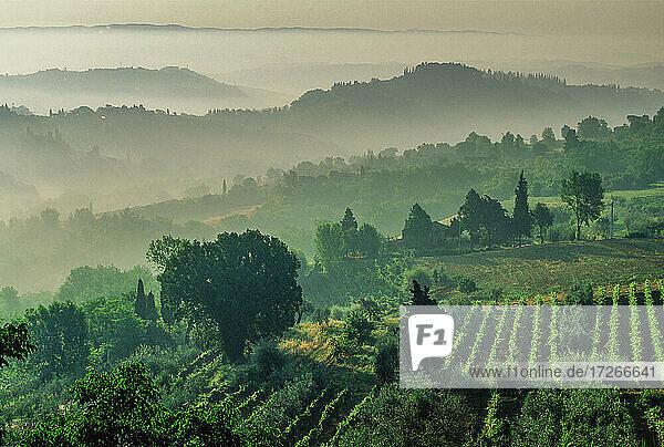 Italien  Toskana  Val D'Orcia  Ländliche Hügel mit Morgennebel