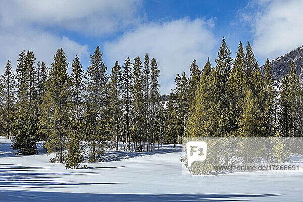 USA  Idaho  Sun Valley  Berg und Bäume im Winter