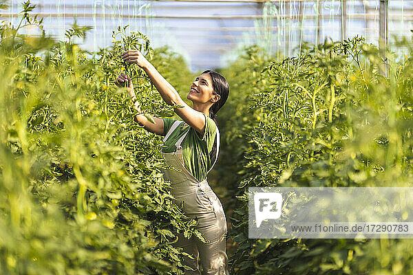 Smiling female farmer checking string support at organic farm