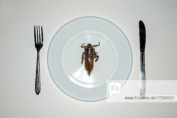 Draufsicht auf ein Insekt im Teller zum Abendessen