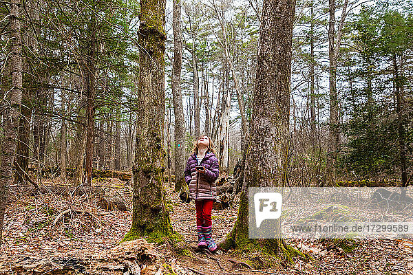 Girl Holding Phone Looking Up Between Trees