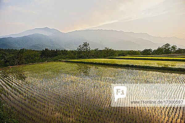 irrigated rice fields near Seoraksan national park