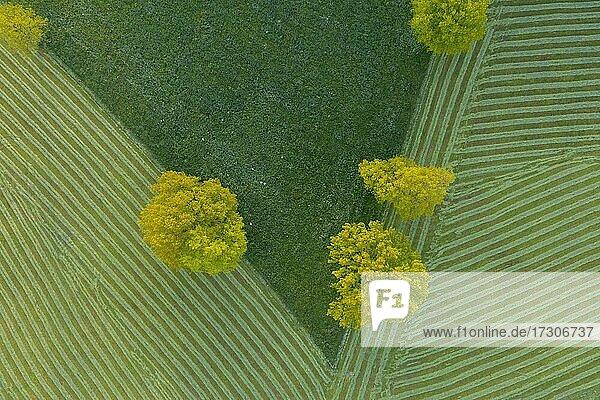 Frisch gemähte Felder  grafisches Foto  bei Gaißach im Morgenlicht  Isartal  Isarwinkel  Luftbild  Oberbayern  Bayern  Deutschland  Europa