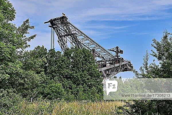 Excavator 1452 is a bucket wheel excavator manufactured in 1961 by VEB Schwermaschinenbau Lauchhammerwerk for lignite mining and used in the former Berzdorf open pit mine until 2001. Lake Berzdorf  Hagenwerder  Görlitz  Saxony  Germany  Europe