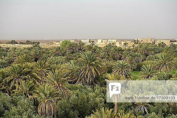 Tal voller Palmen an der Oase Source Bleu  Blaue Quelle  hinten Häuser der Stadt Madkhal Meski  Marokko  Afrika