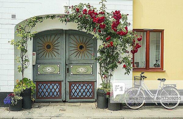 Rosen an einem bunten Tor in einer kleinen Straße im idyllischen Stadtzentrum von Ystad  Schonen  Skandinavien  Schweden  Europa