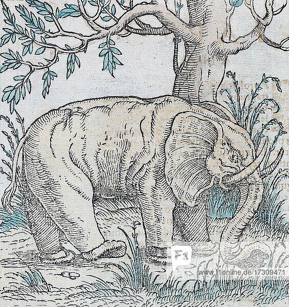 Elefant (Elephas maximus indicus)  handkolorierter Holzschnitt von Sebastian Münster aus der Cosmographia Universalis  Basel 1550  Schweiz  Europa