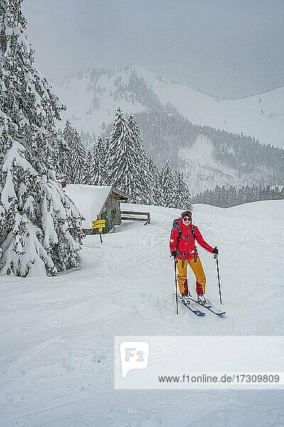 Junge Frau auf Skitour bei Schneefall  Skitourengeher  Skitour zur Brecherspitze  Mangfallgebirge  Bayerische Voralpen  Oberbayern  Bayern  Deutschland  Europa