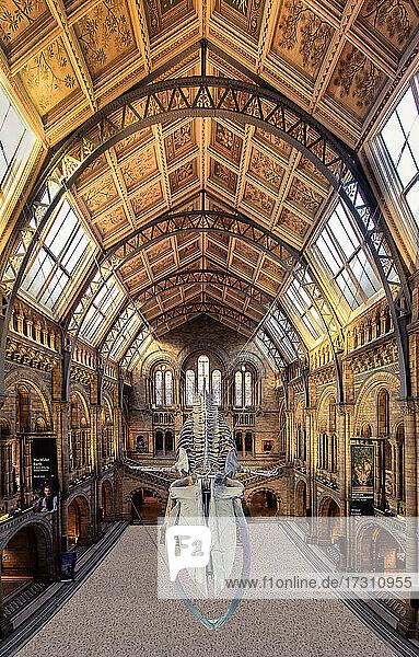 Interior  Natural History Museum  London  England  United Kingdom  Europe