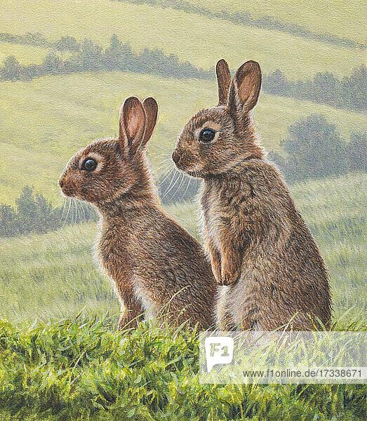 Zwei Kaninchen im Sommerfeld