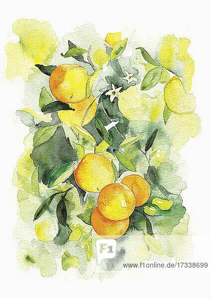 Aquarell von Orangen  die auf einem Baum wachsen