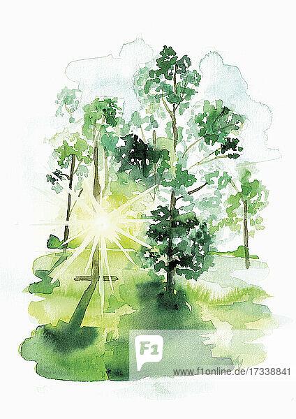 Sonnenstrahlen durch Bäume auf einer Waldlichtung