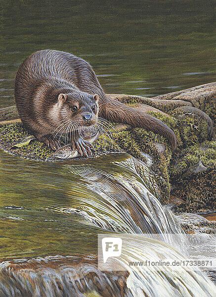 Otter mit gefangenem Fisch am fließenden Wasser
