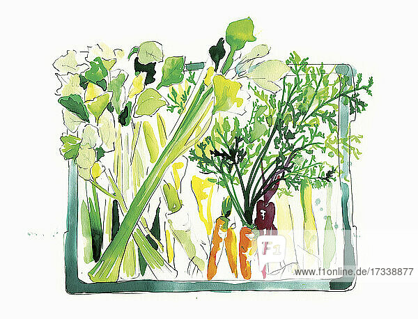 Aquarellmalerei einer Gemüsekiste