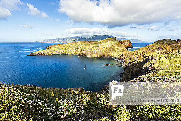 Flowering plants with Ponta de Sao Lourenco cliffs and bay on background  Atlantic Ocean  Canical  Madeira  Portugal  Europe