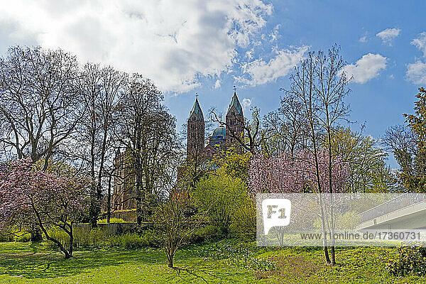 SchUM-Stadt  Domgarten  Baumblüte  Dom zu Speyer  Kaiserdom  St. Maria und St. Stephan  geweiht 1061