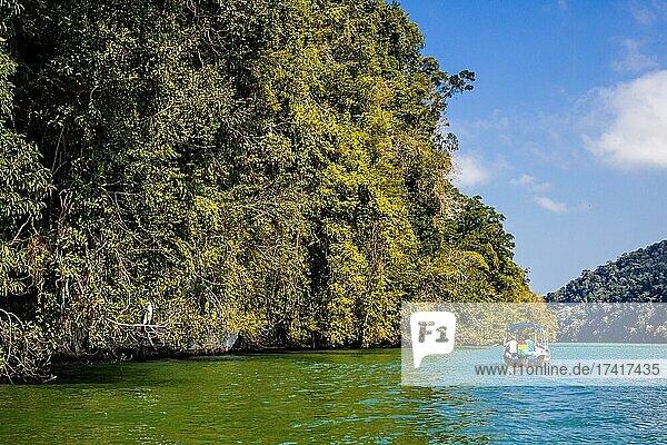 Shore jungle  boat trip on the Rio Dulce  Guatemala  Central America