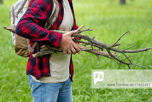 Mature man collecting wooden sticks in forest during weekend