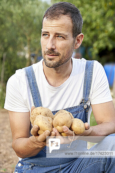 Male farm worker looking away while holding potatoes at agricultural field