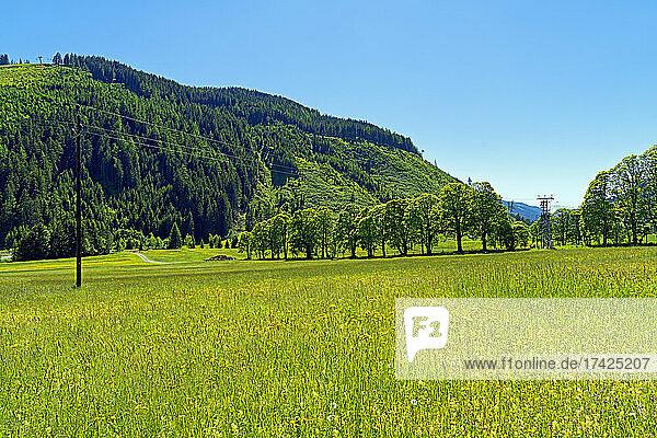Landschaft  Wildblumenwiese