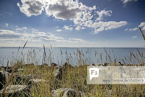 Blick über die Uferbefestigung  an der Gräser im Sonnenlicht leuchten  auf die Meldorfer Bucht