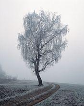 Gefrorene Baumes neben einen Pfad auf eine Snowcoverd Landschaft, Allgäu, Bayern, Deutschland
