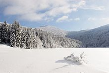 Schneebedeckte Bäume im Wald, Bayerischer Wald, Bayern, Deutschland