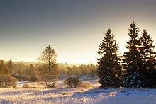 Hohens Venn - Dämmerung - Winter