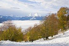 Buche Bäume auf polar Landschaft, Mt Watzmann, Steinernes Meer, Berchtesgadener Alpen, Berchtesgadener Land, Bayern, Deutschland