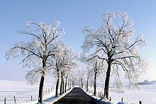 Gefrorene Bäume entlang Road, Crawinkel, Arnstadt, Thüringen, Deutschland