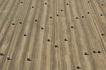 10854027, Landwirtschaft, Landwirtschaft, Felder, Feld, rur