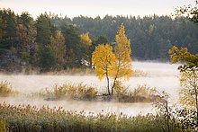 Morgennebel Tyreso Schweden